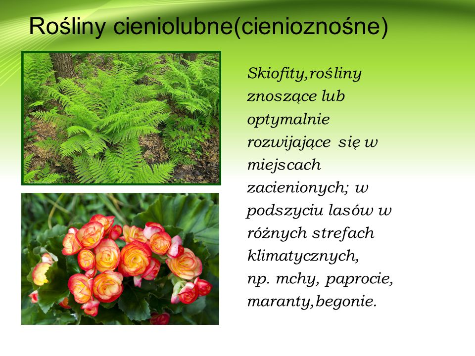 Rośliny cieniolubne(cienioznośne)