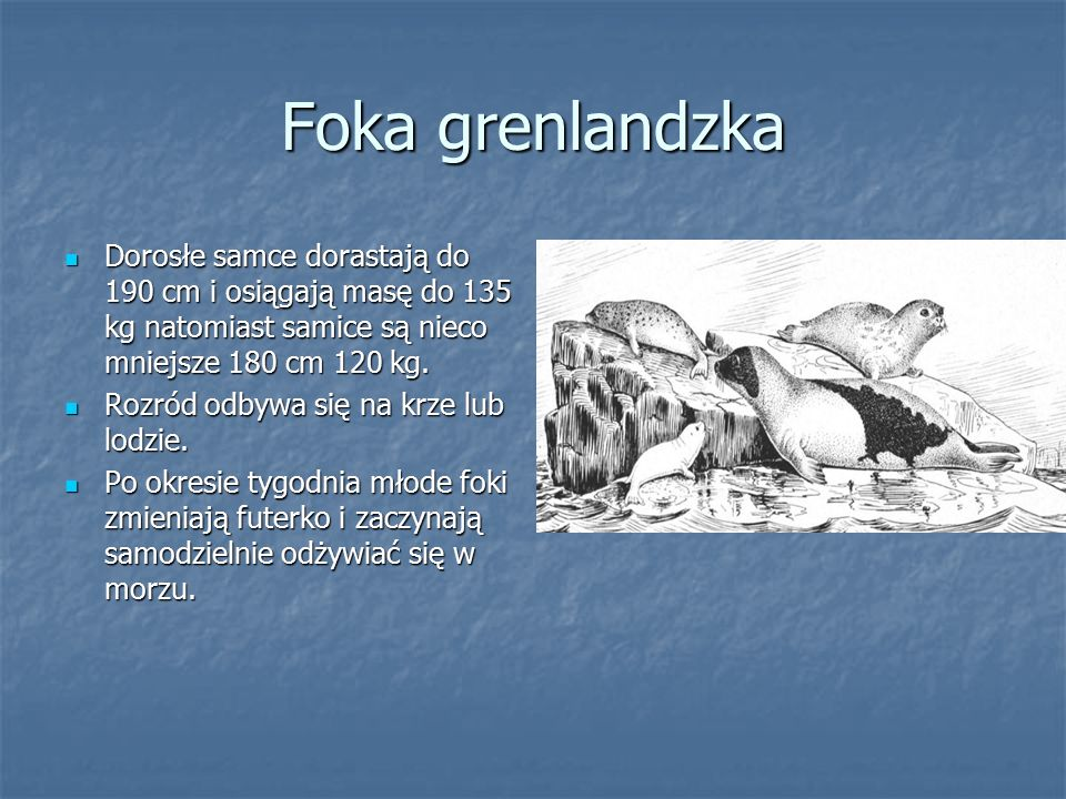 Foka grenlandzka Dorosłe samce dorastają do 190 cm i osiągają masę do 135 kg natomiast samice są nieco mniejsze 180 cm 120 kg.
