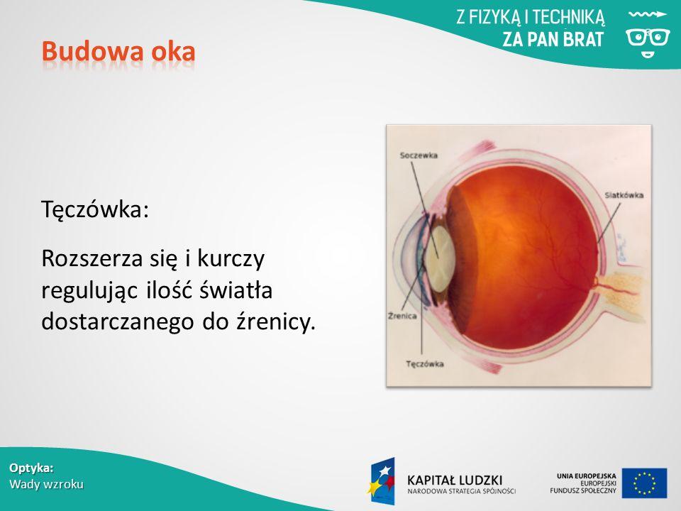 Budowa oka Tęczówka: Rozszerza się i kurczy regulując ilość światła dostarczanego do źrenicy.