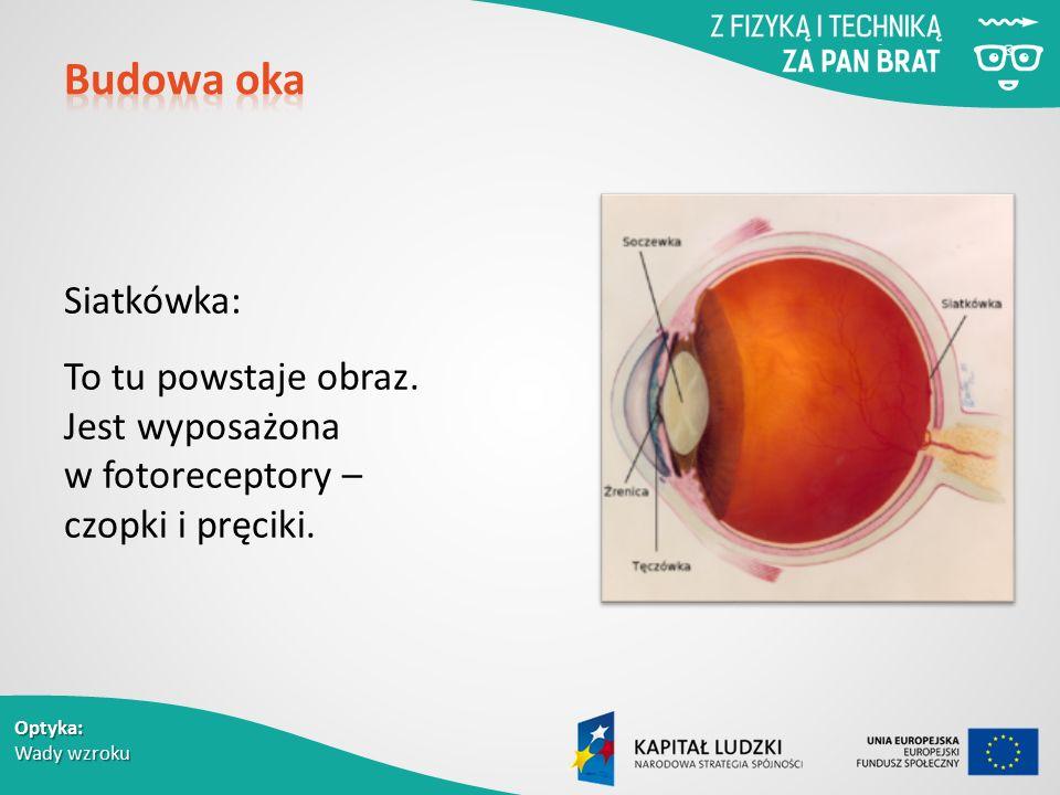 Budowa oka Siatkówka: To tu powstaje obraz. Jest wyposażona w fotoreceptory – czopki i pręciki.