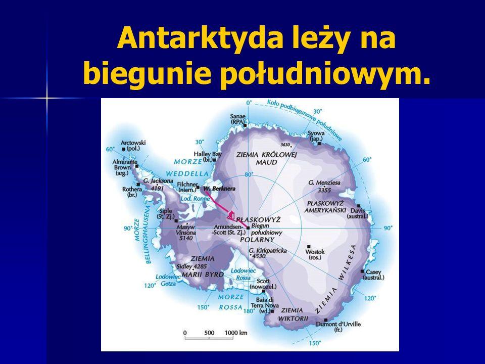 Antarktyda leży na biegunie południowym.