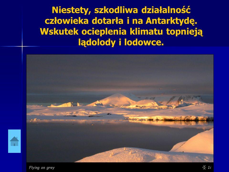 Niestety, szkodliwa działalność człowieka dotarła i na Antarktydę