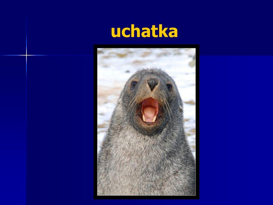 uchatka