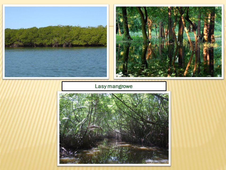 Lasy mangrowe