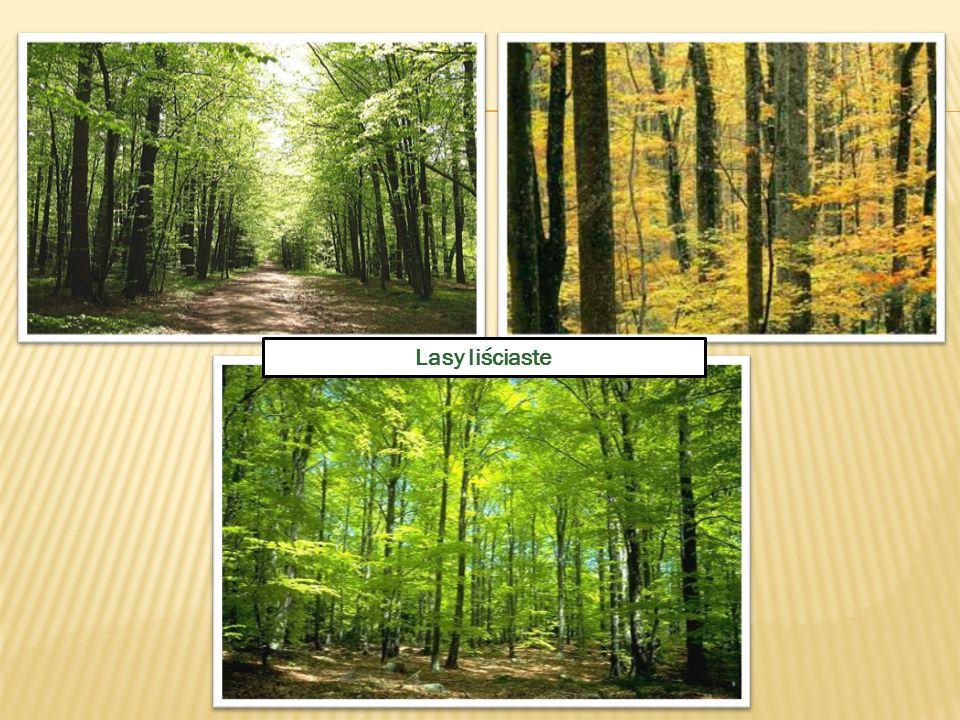 Lasy liściaste