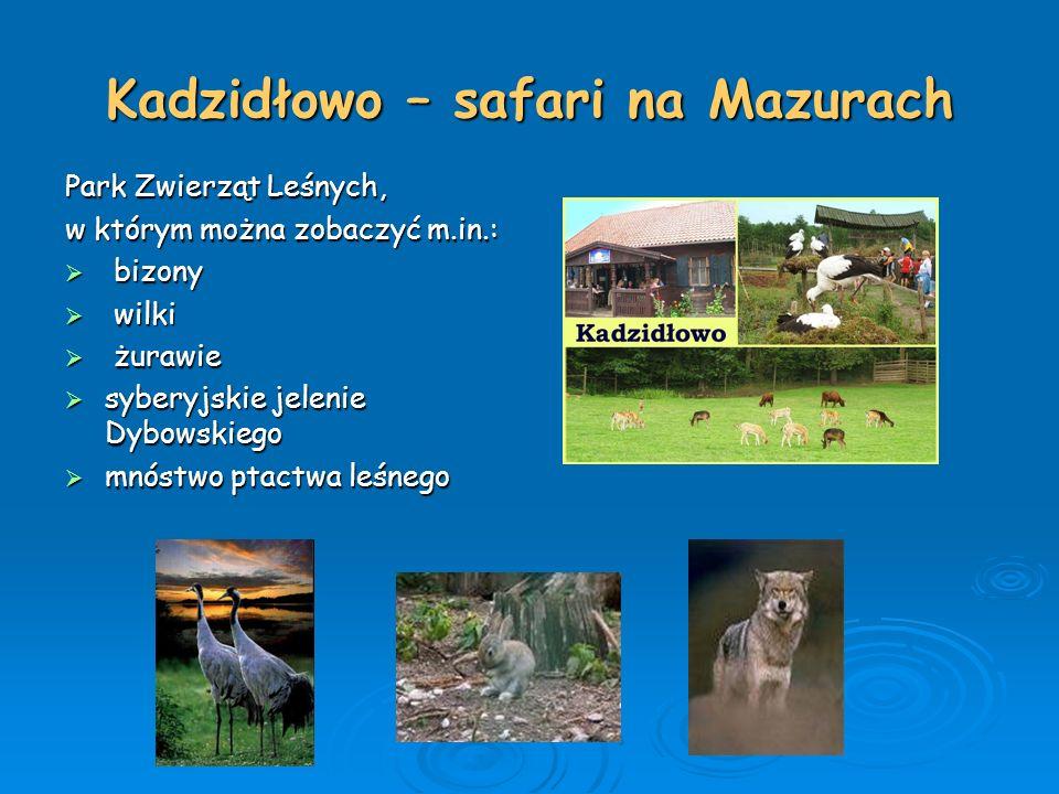 Kadzidłowo – safari na Mazurach