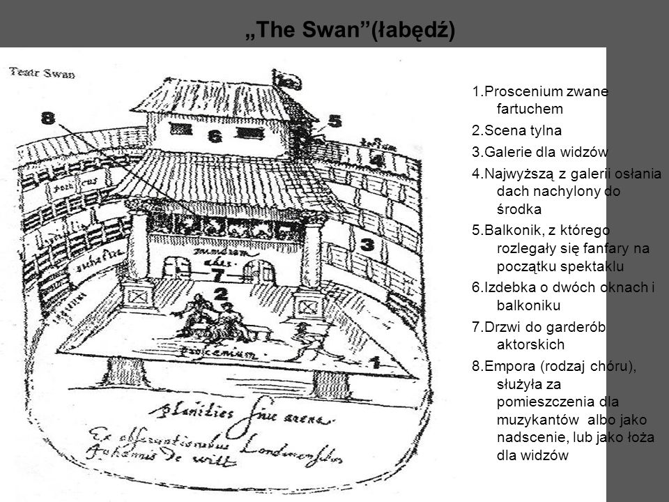 """""""The Swan (łabędź)"""