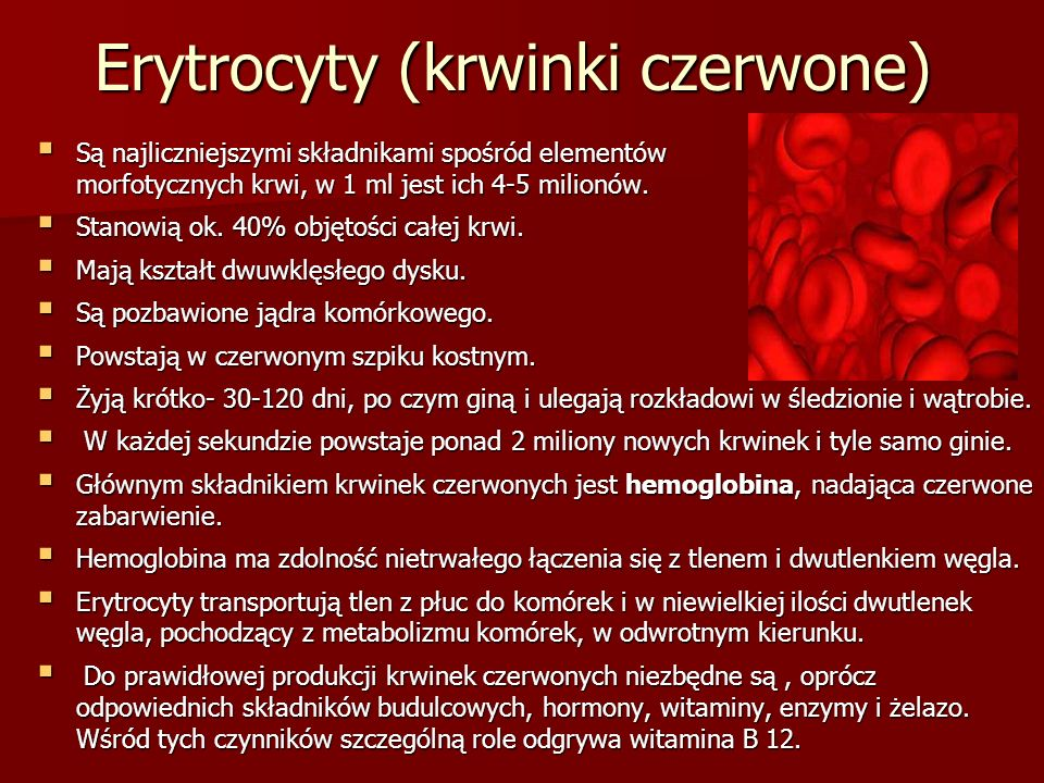 Erytrocyty (krwinki czerwone)