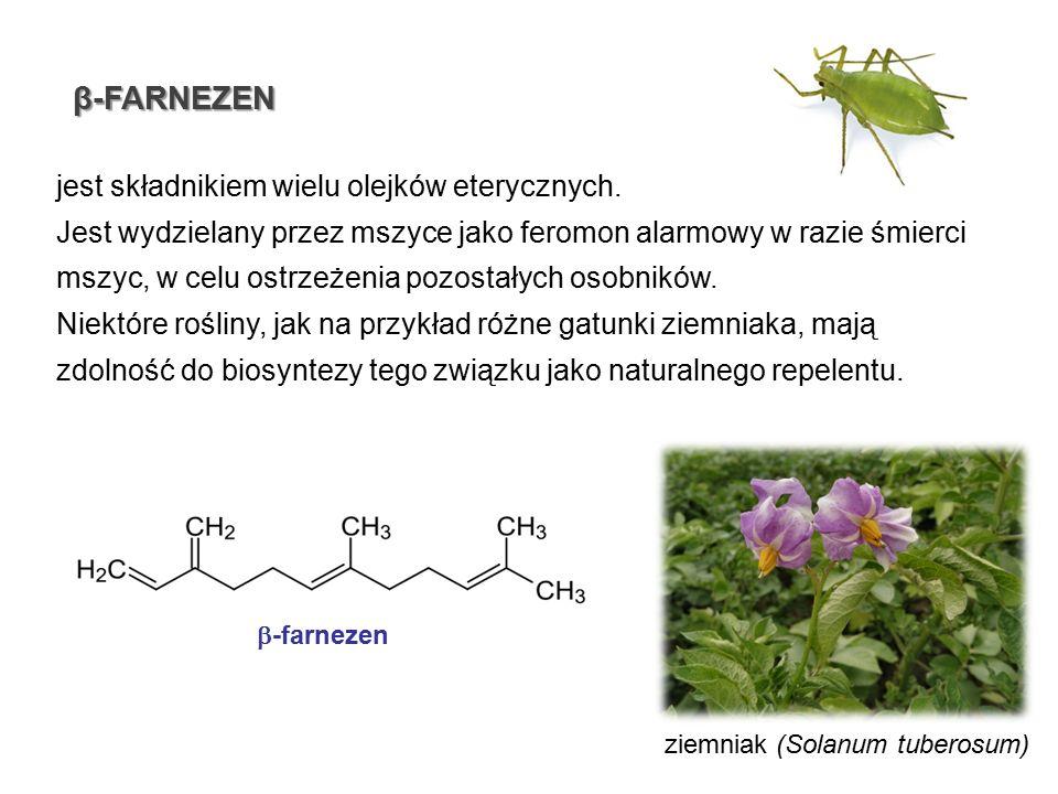 β-FARNEZEN jest składnikiem wielu olejków eterycznych.