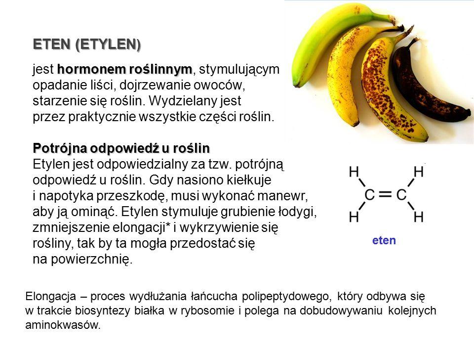 ETEN (ETYLEN) jest hormonem roślinnym, stymulującym opadanie liści, dojrzewanie owoców, starzenie się roślin. Wydzielany jest.