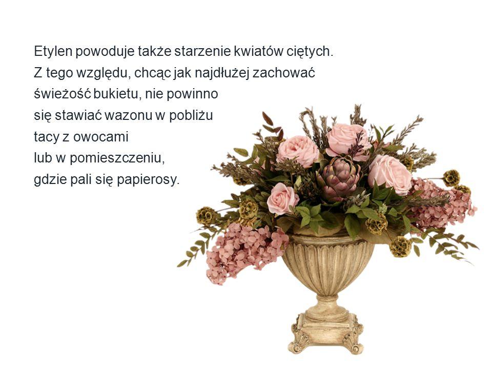 Etylen powoduje także starzenie kwiatów ciętych