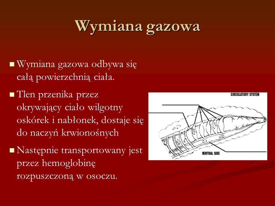 Wymiana gazowa Wymiana gazowa odbywa się całą powierzchnią ciała.