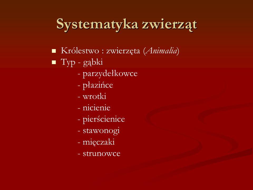 Systematyka zwierząt Królestwo : zwierzęta (Animalia) Typ - gąbki