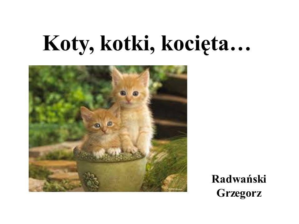 Koty, kotki, kocięta… Radwański Grzegorz
