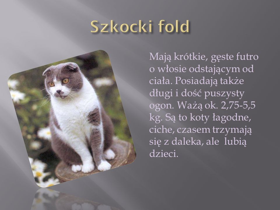 Szkocki fold