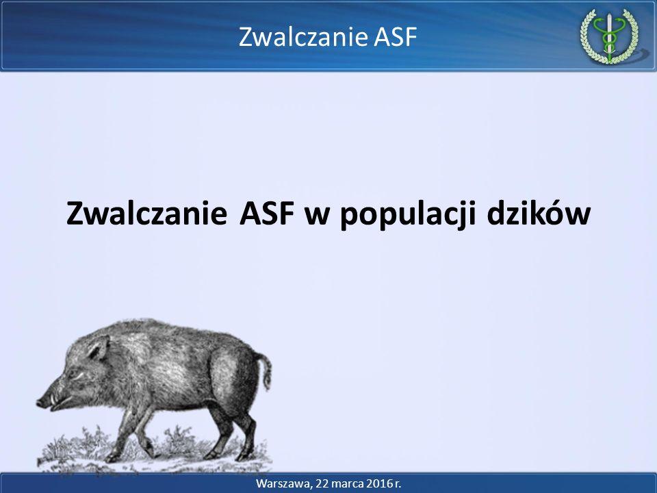 Zwalczanie ASF w populacji dzików