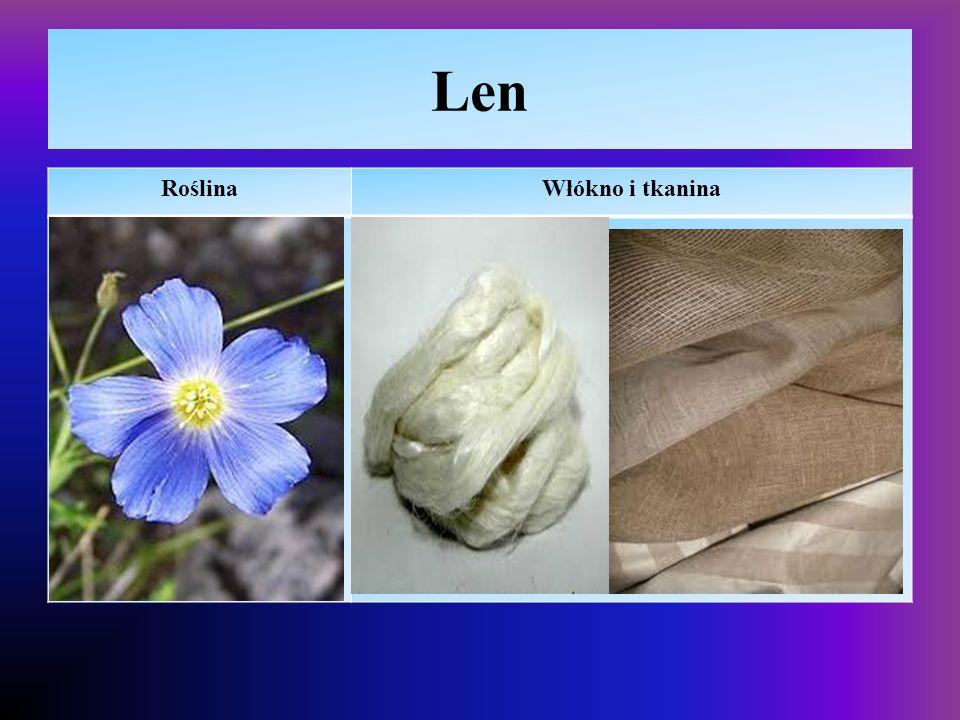 Len Roślina Włókno i tkanina