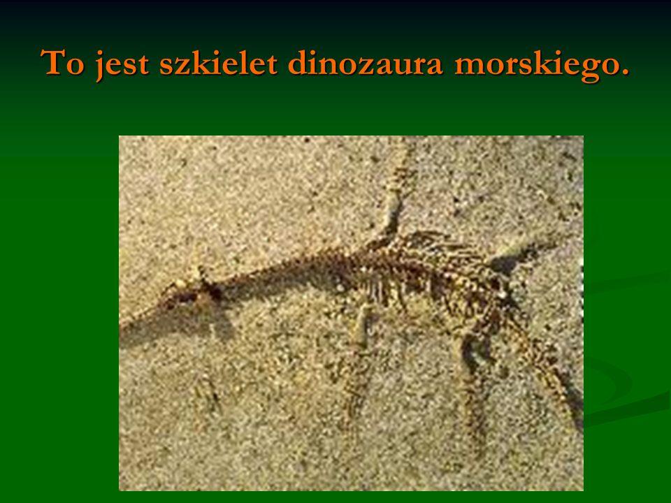 To jest szkielet dinozaura morskiego.