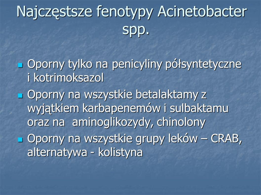 Najczęstsze fenotypy Acinetobacter spp.