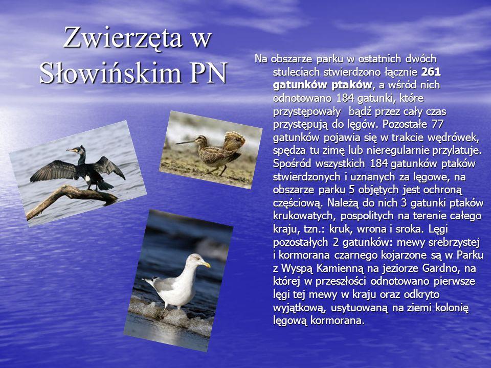 Zwierzęta w Słowińskim PN