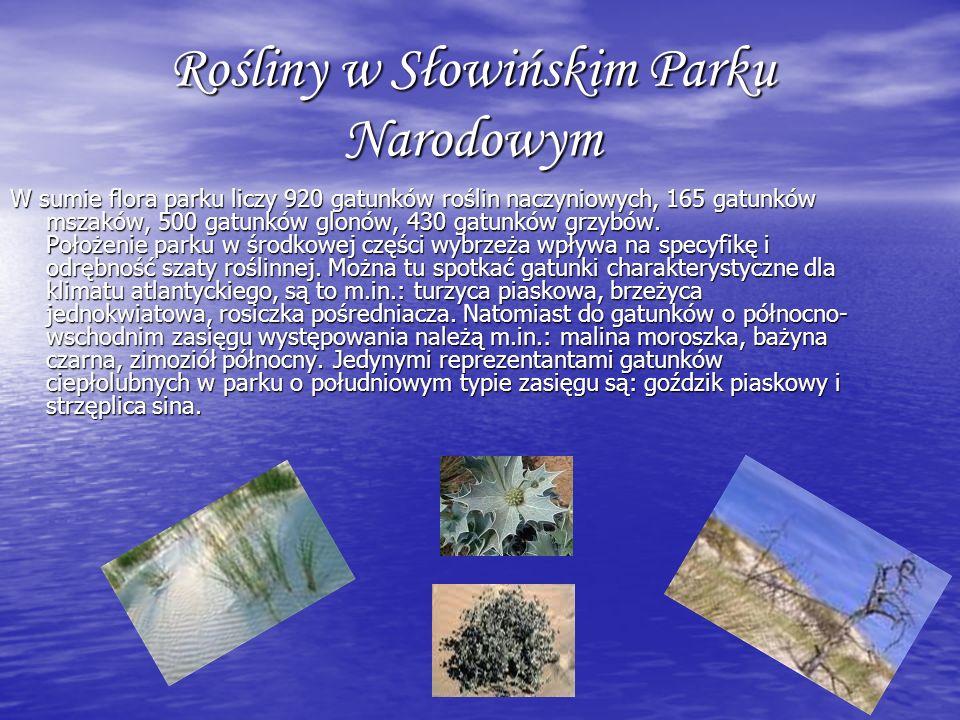 Rośliny w Słowińskim Parku Narodowym