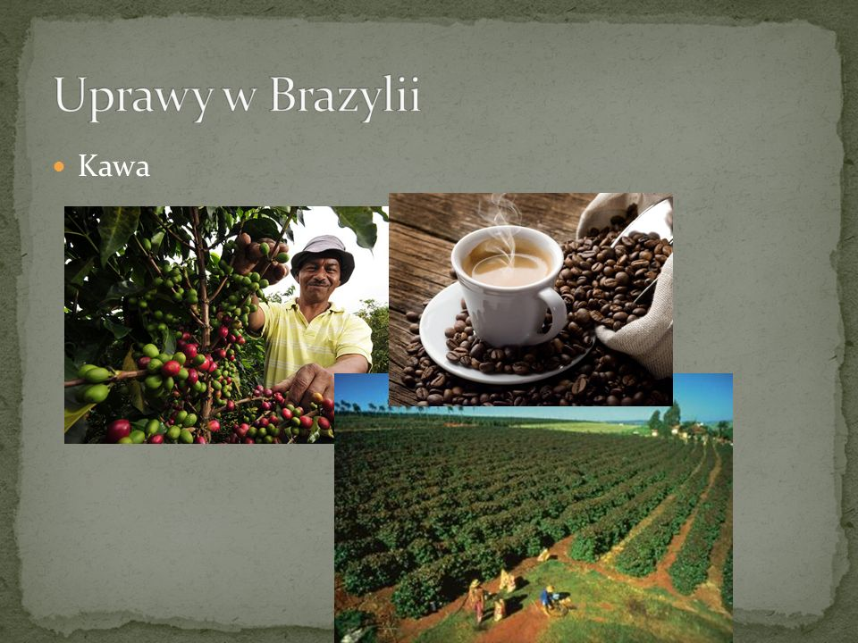 Uprawy w Brazylii Kawa