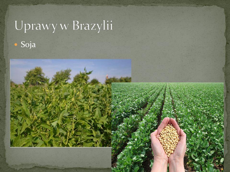 Uprawy w Brazylii Soja