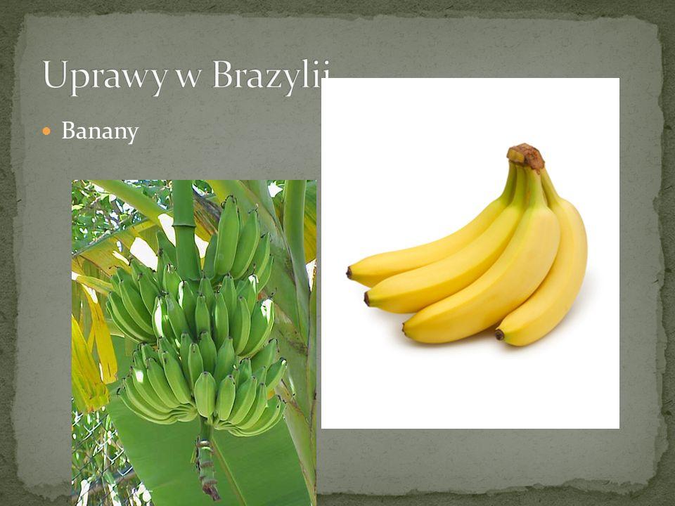 Uprawy w Brazylii Banany