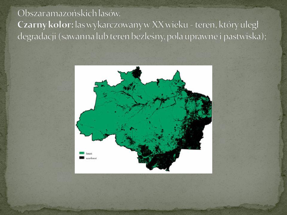 Obszar amazońskich lasów
