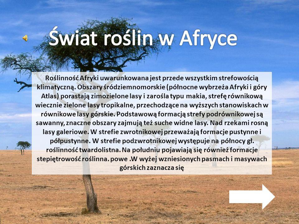 Świat roślin w Afryce