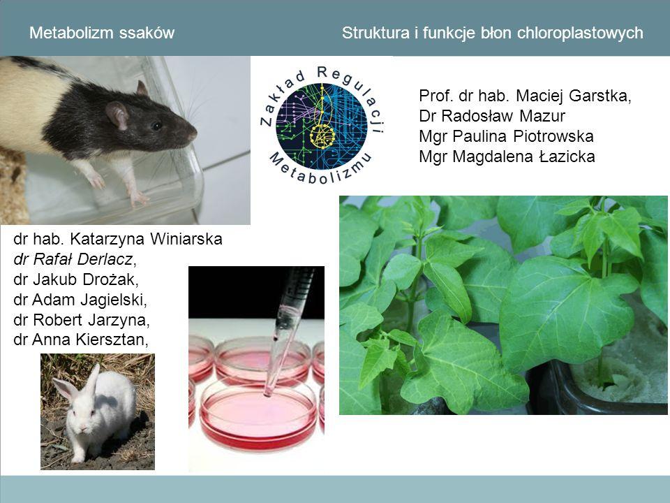 Metabolizm ssaków Struktura i funkcje błon chloroplastowych. Prof. dr hab. Maciej Garstka, Dr Radosław Mazur.