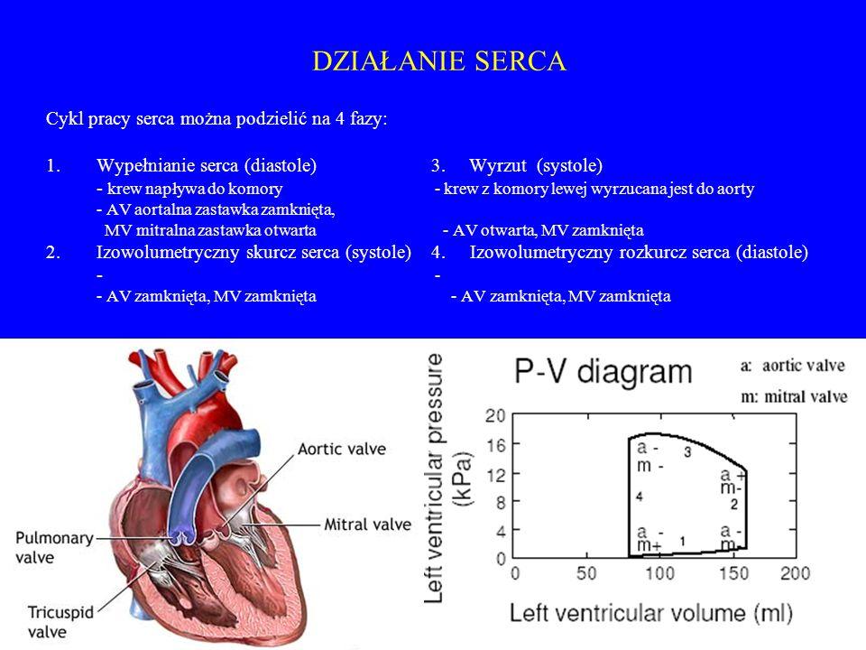DZIAŁANIE SERCA Cykl pracy serca można podzielić na 4 fazy: