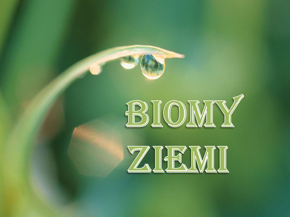 Biomy Ziemi