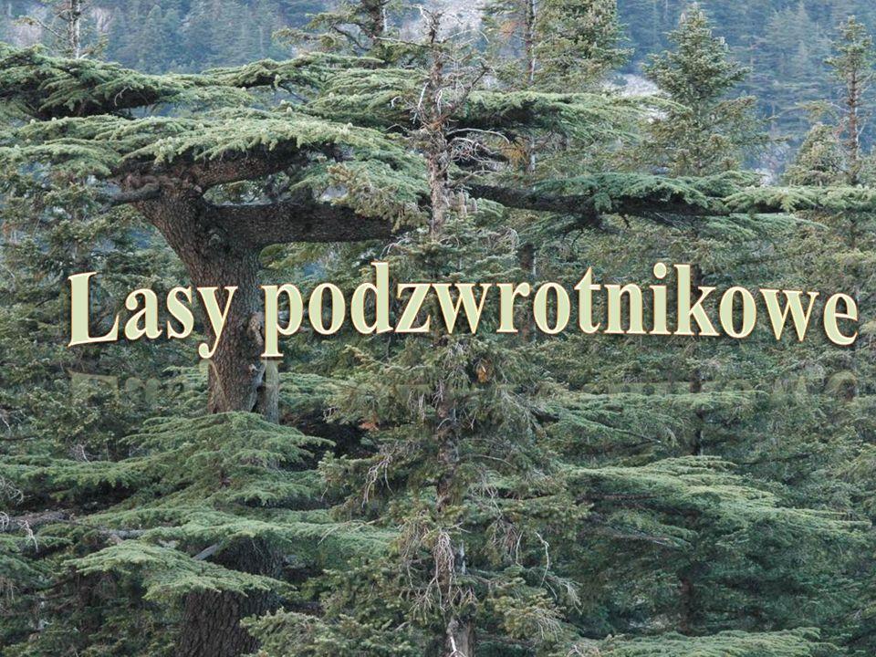 Lasy podzwrotnikowe