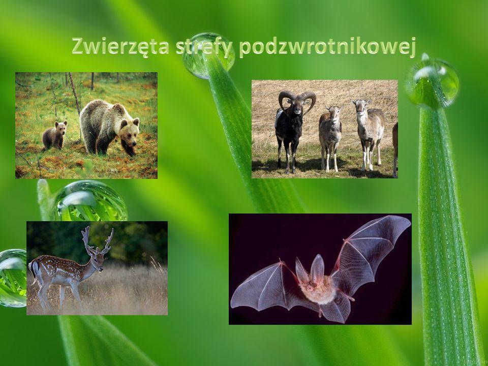 Zwierzęta strefy podzwrotnikowej