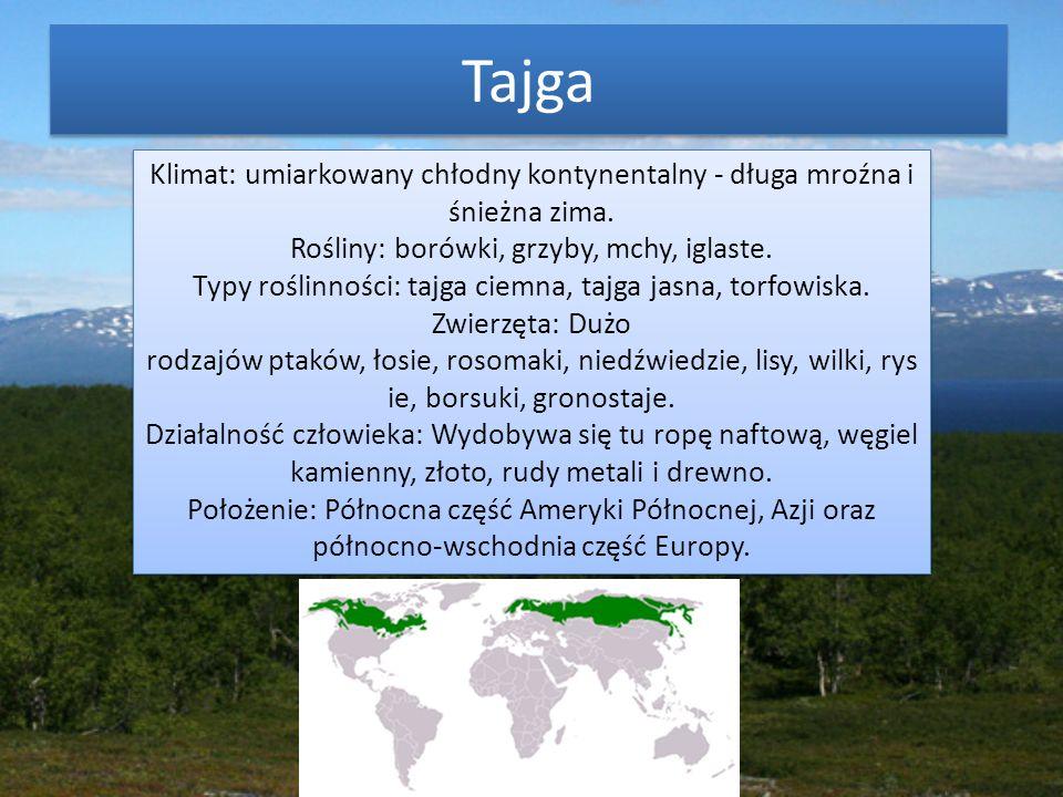 Tajga Klimat: umiarkowany chłodny kontynentalny - długa mroźna i śnieżna zima. Rośliny: borówki, grzyby, mchy, iglaste.