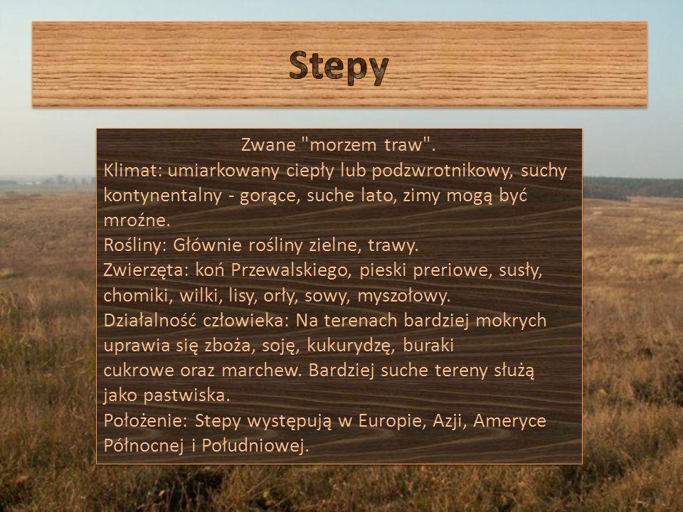 Stepy Zwane morzem traw .