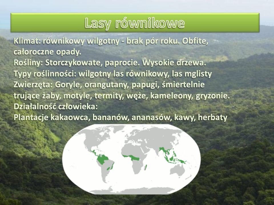 Lasy równikowe Klimat: równikowy wilgotny - brak pór roku. Obfite, całoroczne opady. Rośliny: Storczykowate, paprocie. Wysokie drzewa.
