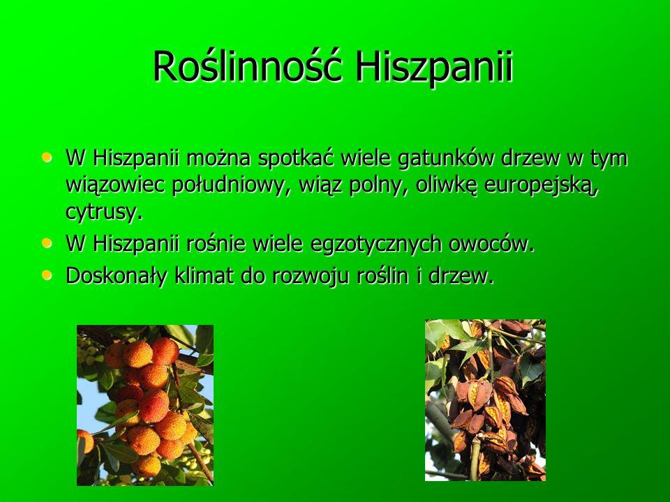 Roślinność Hiszpanii W Hiszpanii można spotkać wiele gatunków drzew w tym wiązowiec południowy, wiąz polny, oliwkę europejską, cytrusy.