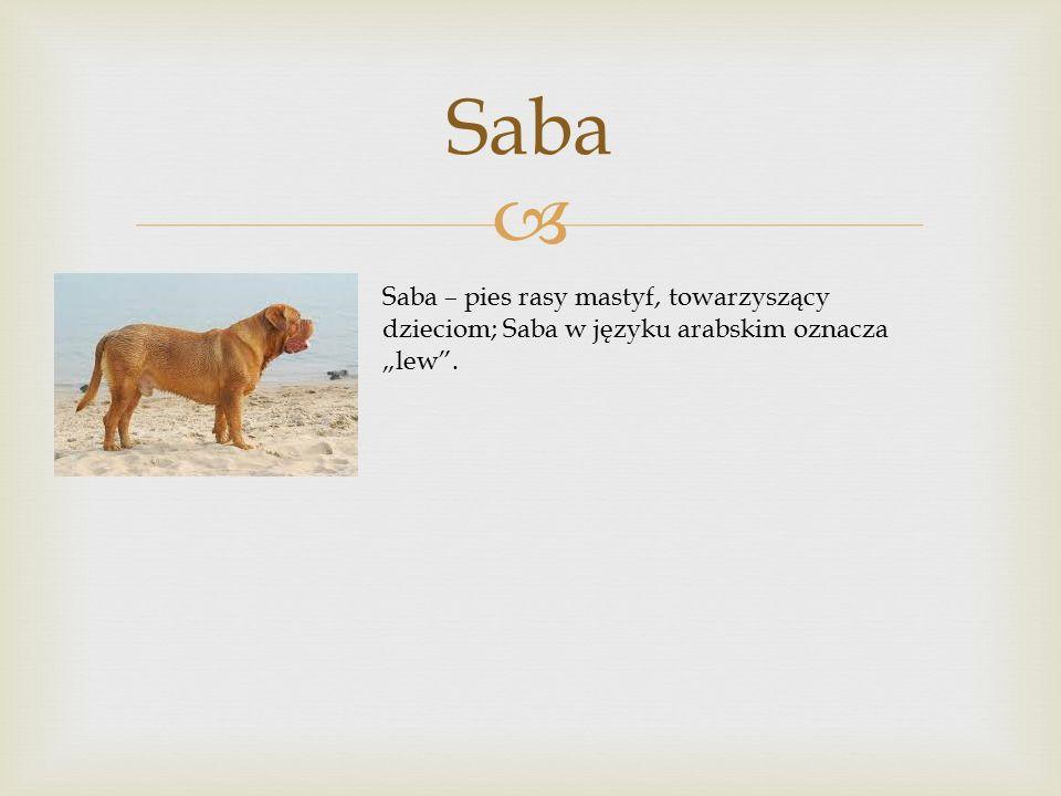 """Saba Saba – pies rasy mastyf, towarzyszący dzieciom; Saba w języku arabskim oznacza """"lew ."""