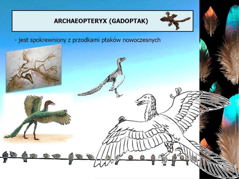 Archaeopteryx (gadoptak)