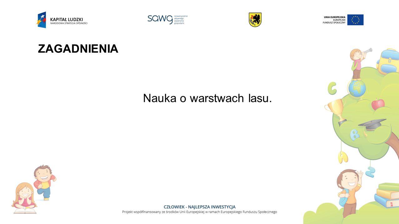 ZAGADNIENIA Nauka o warstwach lasu.