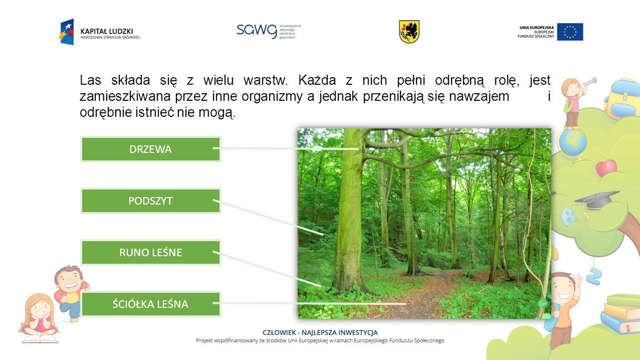 Las składa się z wielu warstw
