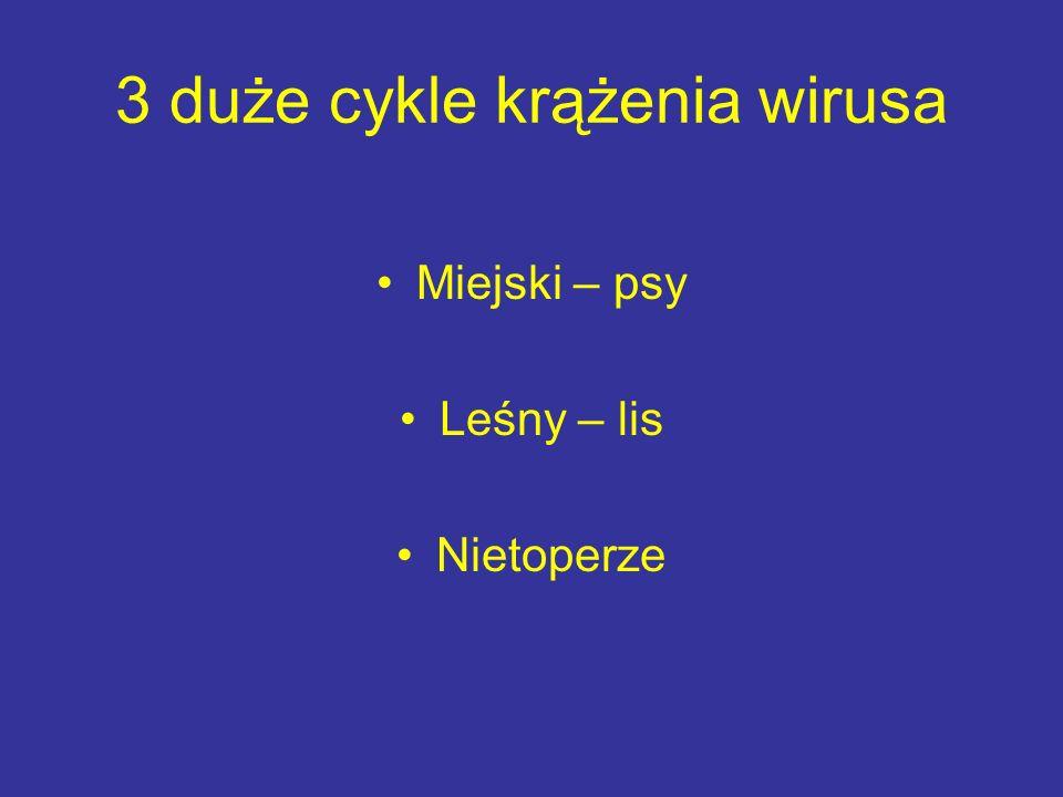3 duże cykle krążenia wirusa