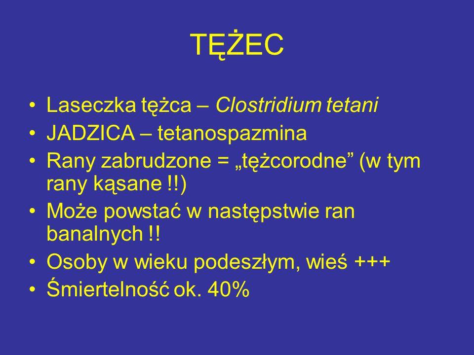 TĘŻEC Laseczka tężca – Clostridium tetani JADZICA – tetanospazmina