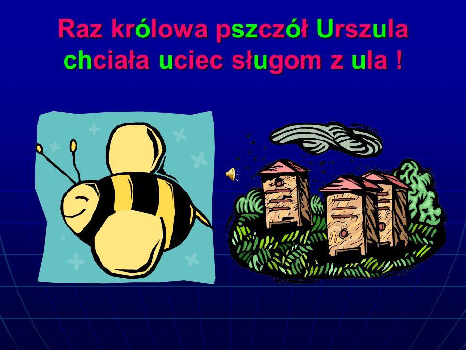 Raz królowa pszczół Urszula chciała uciec sługom z ula !