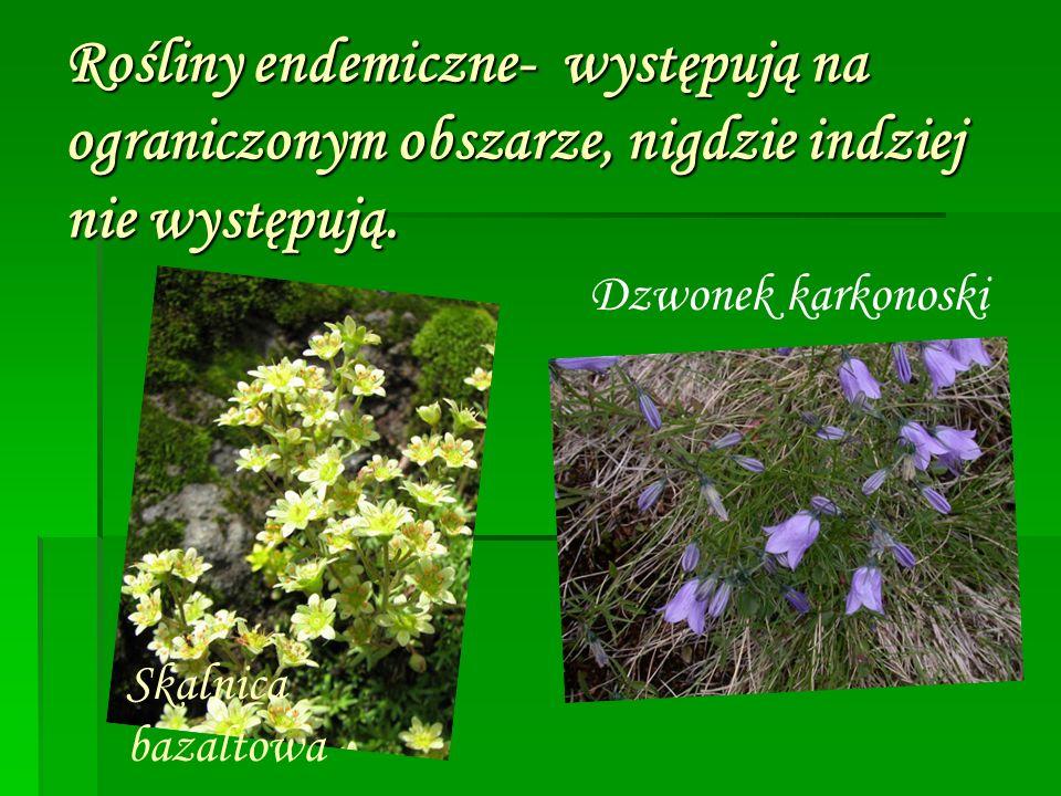 Rośliny endemiczne- występują na ograniczonym obszarze, nigdzie indziej nie występują.