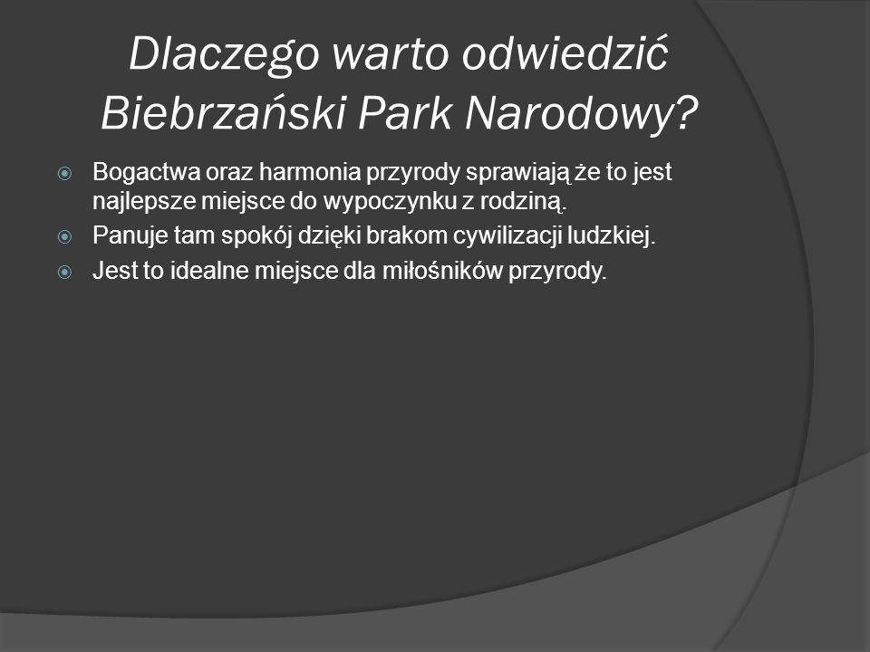 Dlaczego warto odwiedzić Biebrzański Park Narodowy