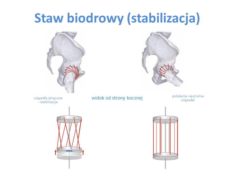 Staw biodrowy (stabilizacja)