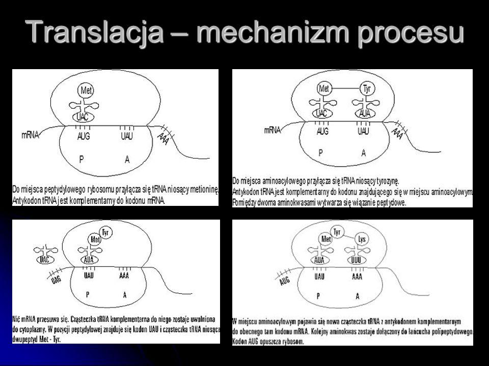 Translacja – mechanizm procesu